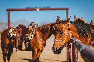 sandy valley ranch horses